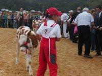 Wystawa bydła podczas imprezy Pożegnanie Wakacji w Rudawce Rymanowskiej